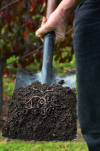 Gartenwürmer: Ja oder Nein?