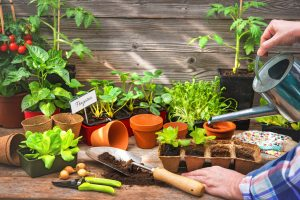 Gemüse und Obst selber ziehen- Warum es gesünder als aus dem Supermarkt ist
