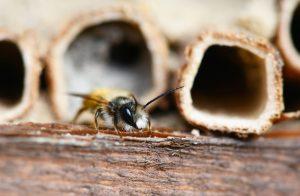 Insektenhotels als Beitrag zum Arterhalt